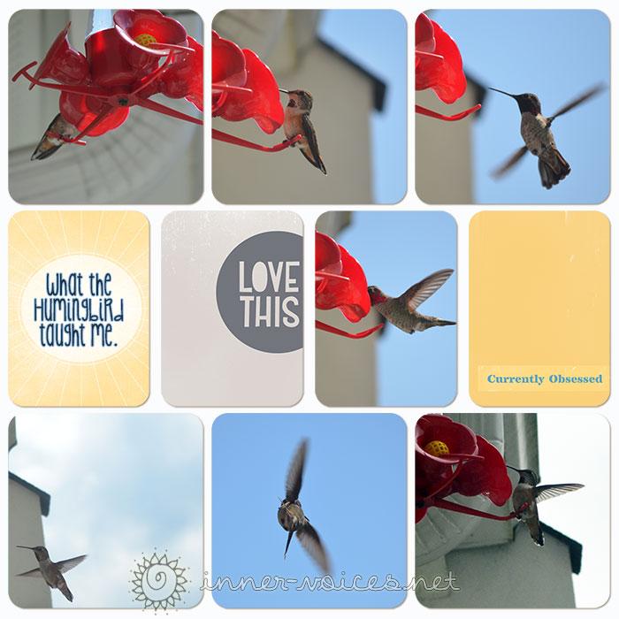 thehummingbird